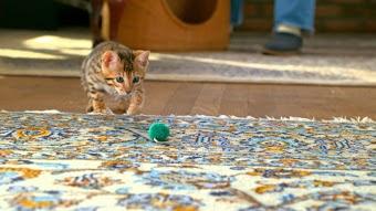 Too Cute! Kittens