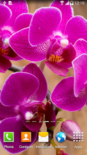 Orchids Wallpaper- screenshot thumbnail