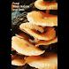 Fungi - Their Nature and Uses