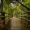 Taquamenon Falls Path.jpg
