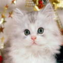 Cute Kittens Wallpapers icon