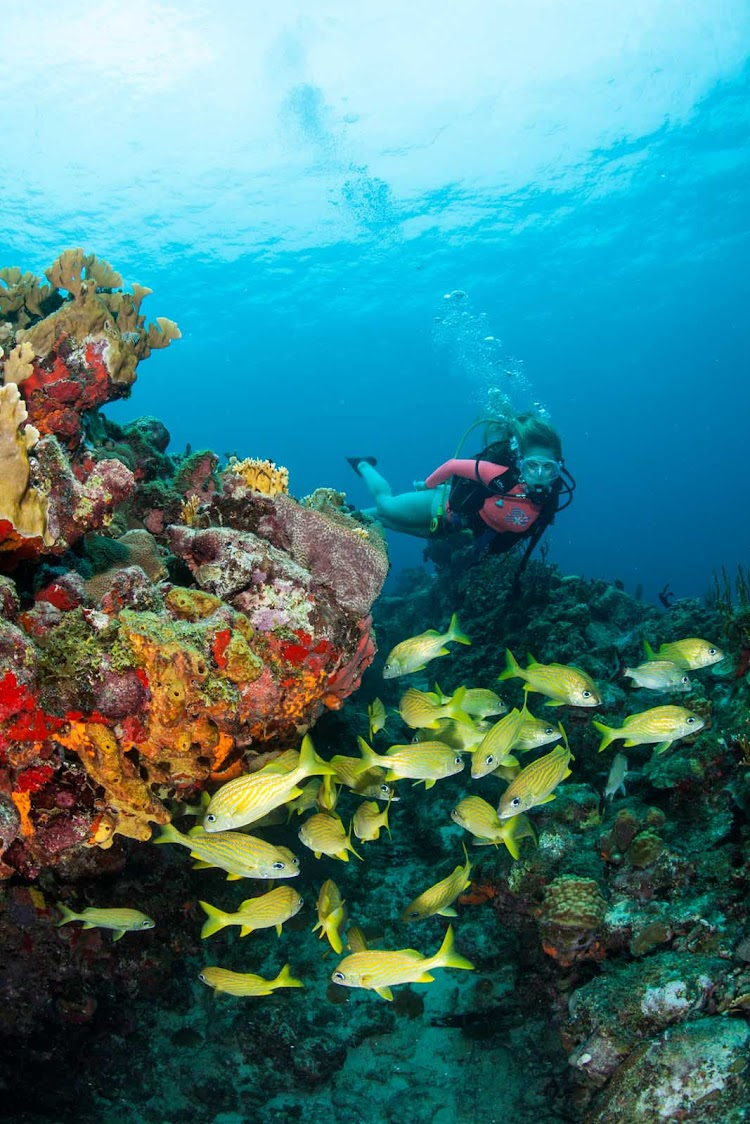A scuba checks out a school of tropical fish at Calf Rocks off St. Thomas.