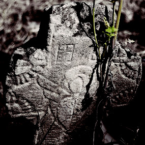 Dead and alive by Micky Mihalache - Buildings & Architecture Places of Worship ( plant, life, death, green, cross, selective color, pwc )