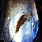 Opalescent sea slug