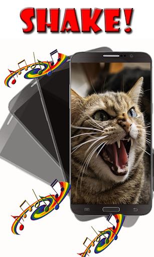 搖!憤怒的貓的聲音!