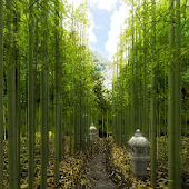 Bamboo Forest Lane