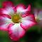 DSCN0344-.jpg