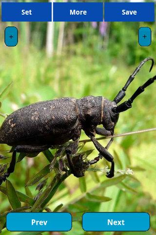 Insects wallpapers - screenshot