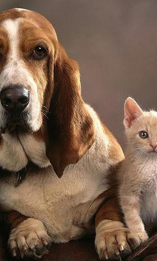 子犬と子猫の壁紙