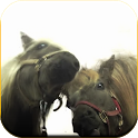 Horses lick screen Wallpaper icon