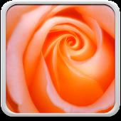 Macro Rose Live Wallpaper
