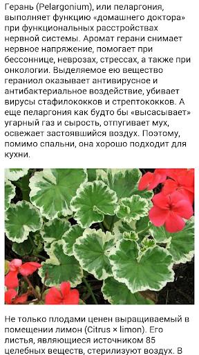 Полезные комнатные растения.