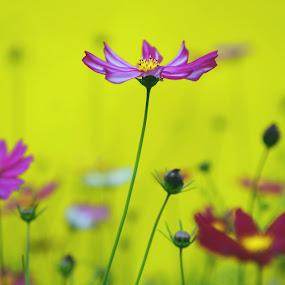 Flowers by Leka Huie - Flowers Flower Gardens ( flowers,  )