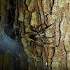 Tree Spider (Part 2)