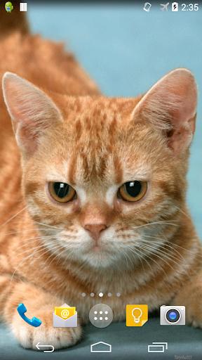 Ginger Cat Live Wallpaper