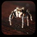 クモアニメーション壁紙 icon