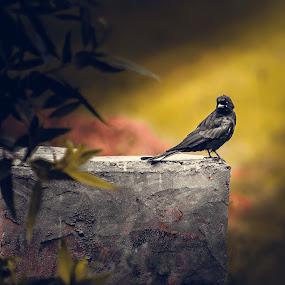 Bird by Zeeshan Khan - Animals Birds (  )