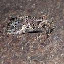 Oweld Moth