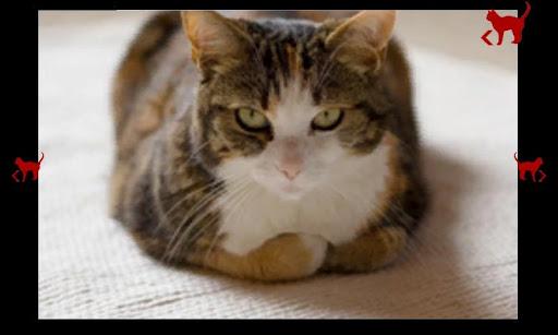 玩免費休閒APP|下載어린이 볼링 고양이 app不用錢|硬是要APP