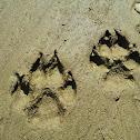 Wolf (tracks)