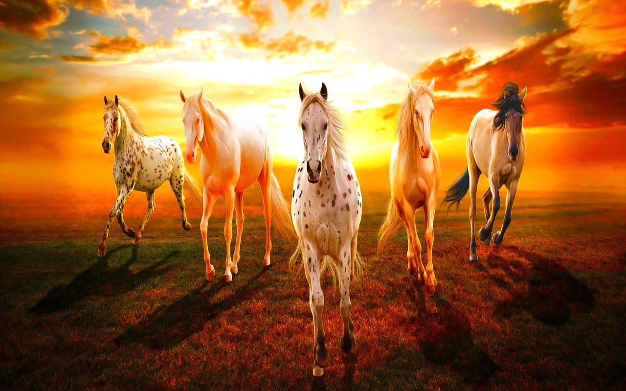 Hd wallpaper horse - Horse Wallpaper Screenshot