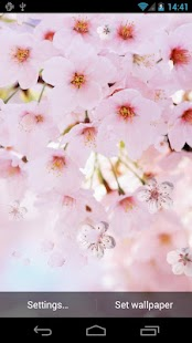 Cherry Flowers Live Wallpaper - screenshot thumbnail