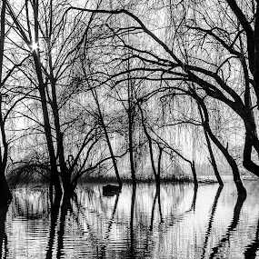 Reflections on Water by Paulo Veiga - Nature Up Close Trees & Bushes ( reflections on the water, water, black and white, 2014, paulo veiga, black & white, pixoto, bw, reflections, photography, tree, bushes, silhouettes, trees,  )