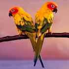 鸟类拼图 icon