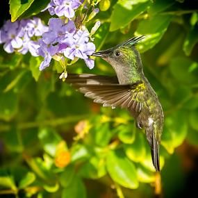 by Anna Trandeva - Animals Birds