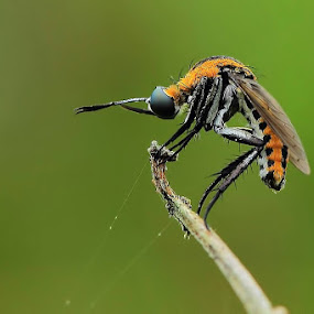 Standby by Fadel Satriawan - Animals Insects & Spiders