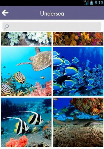 Mr. Fish Wallpapers Undersea