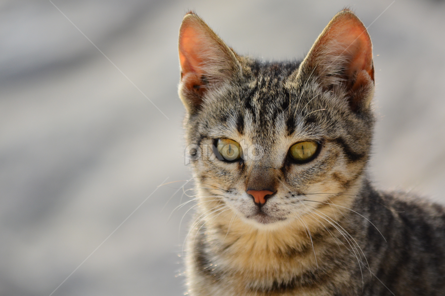 by Mohamed Nasser - Animals - Cats Portraits