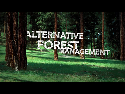 Alternative Forest Management