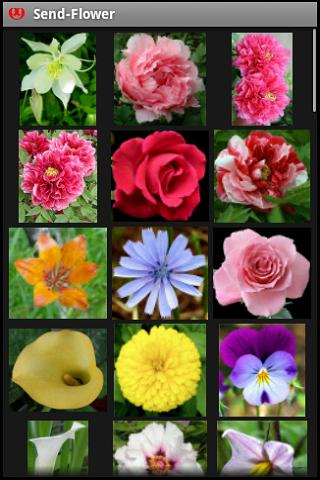 Send Flower+LoveNote.送花+情話