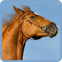 Horse Wallpapers icon
