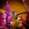 Hbird_10-22-14_TB5A2117.jpg