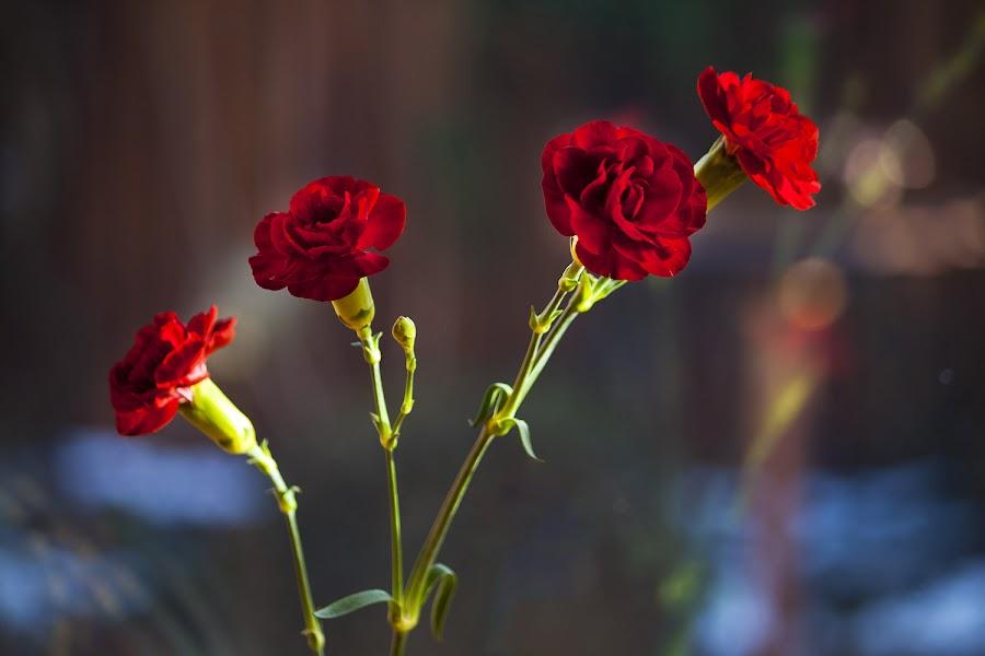 Red Flowers by Anna Guðmundsdóttir - Flowers Flower Gardens ( red, flowers,  )
