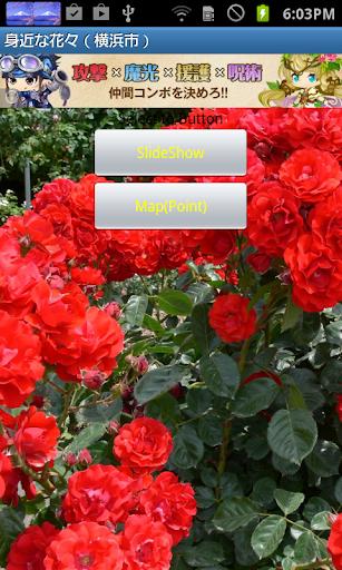 身近な花々 横浜近郊 JP017