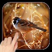 3D Birds Live Wallpaper