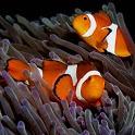 iSlider Aquarium Fish Puzzles icon