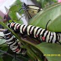 Paper Kite Caterpillar