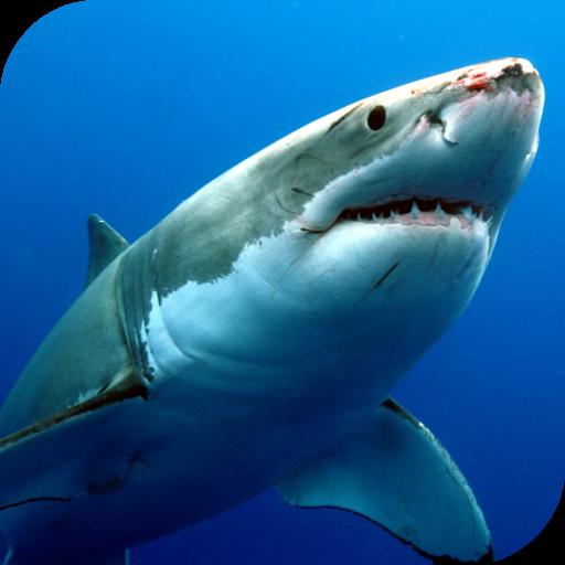 Shark 3d live wallpaper unique live shark wallpaper for pc.