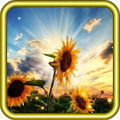 Sunflower Sunset liv wallpaper