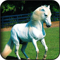 Horse 3D wallpapers icon