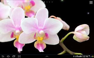Screenshot of Orchids Wallpaper