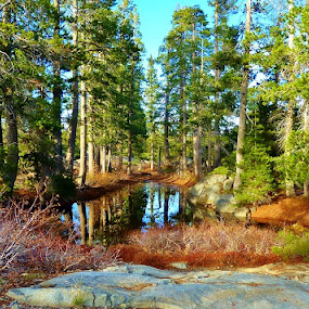 by Samantha Linn - Landscapes Forests