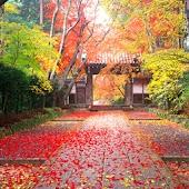 3D autumn japan