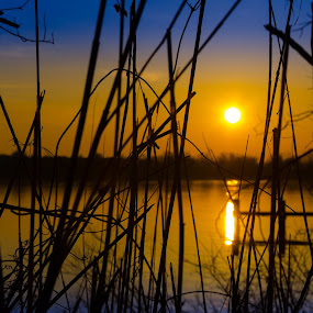 Sunrise thru the Reeds by RomanDA Photography - Landscapes Sunsets & Sunrises ( water, 2014, boats, baltimore, reflections, bridge, sunrise, spring )