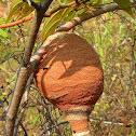 Wasp nest?