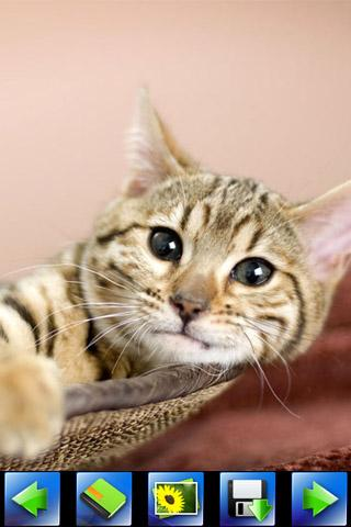 Beautiful cat wallpaper - Android Apps on Google Play